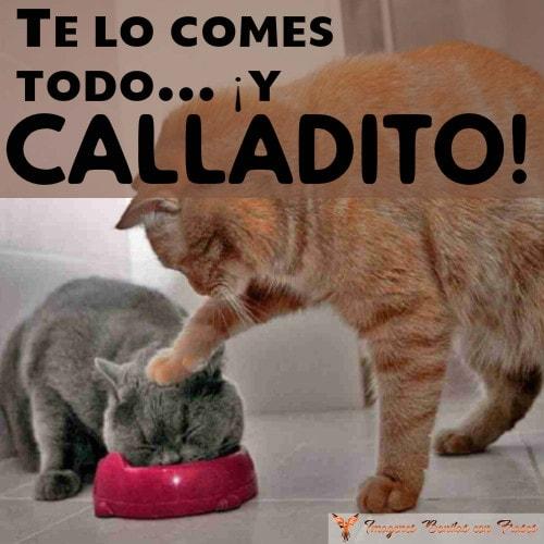 graciosa sobre gatos y comida